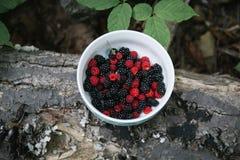 充分碗野生黑和红色莓果 图库摄影