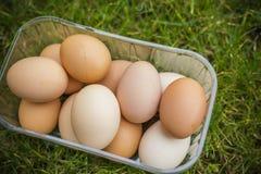 充分箱在一棵绿色春天草的鸡蛋 免版税库存照片