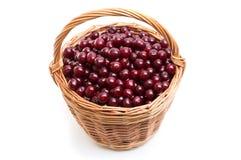 充分篮子在白色背景的新鲜的红色樱桃 库存图片
