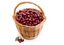 充分篮子在白色背景的新鲜的红色樱桃 免版税图库摄影