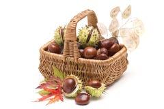 充分篮子栗子和秋季叶子 免版税库存照片