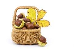充分篮子栗子和秋季叶子 库存图片