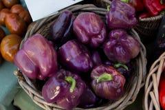 充分篮子紫色辣椒的果实 库存图片