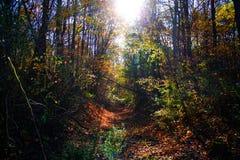 充分美丽的五颜六色的秋天森林树和明亮的sunlig 免版税库存照片