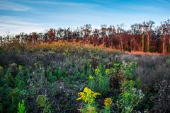 充分美丽的五颜六色的秋天草甸和森林花 库存图片