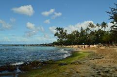 充分美妙的绿色沙子海滩乌龟 库存图片
