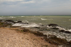 充分肮脏的海水海草 库存照片