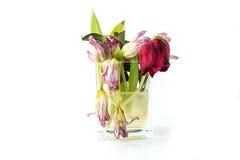 充分花瓶凋枯的和死的花 免版税库存照片