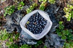 充分袋子蓝莓 图库摄影