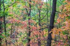 充分豪华的森林特写镜头秋天颜色,绿色,红色,橙色 图库摄影