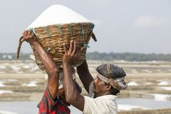充分运载木篮子在头的盐和走在盐领域的工作者到商店 免版税库存图片
