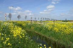 充分银行黄色油菜籽在荷兰开拓地春天 库存图片