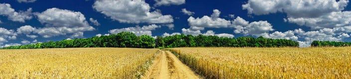充分领域的金黄麦子 免版税库存照片