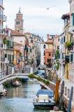 充分飞行海鸥水面上的运河街道大厦和桥梁在威尼斯意大利 图库摄影