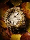 充分鸟的巢美国货币 免版税库存图片