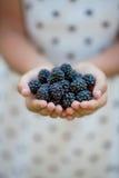 充分黑莓的手 图库摄影