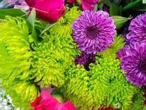 充满活力的五颜六色的绿色,紫色和桃红色妈咪backgound 免版税库存照片