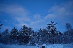 充满活力的冷的蓝色冬天天空在结冰的森林里 免版税库存图片