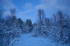 充满活力的冷的蓝色冬天天空在结冰的森林里 图库摄影