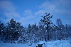 充满活力的冷的蓝色冬天天空在结冰的森林里 免版税图库摄影