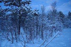 充满活力的冷的蓝色冬天天空在结冰的森林里 免版税库存照片