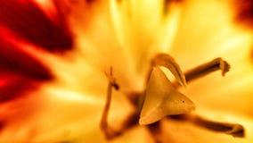 充满活力的在夏天野花的火红色和黄色颜色 免版税库存照片