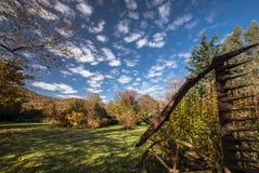 充满活力的本质颜色在秋天庭院里 图库摄影