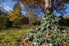 充满活力的本质颜色在秋天庭院里 免版税图库摄影