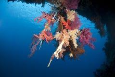 充满活力的水下的热带珊瑚礁场面。 免版税库存图片