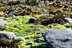 充满活力的海草 库存图片