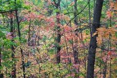 充满活力的秋天颜色的厚实的森林的绿色,橙色,红色和y 免版税库存图片