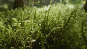 充满活力的绿草特写镜头 接近的草绿色宏指令 深度露水领域草狭窄 股票录像