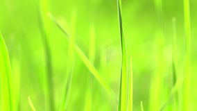 充满活力的绿草特写镜头 绿草宏指令 绿草和秀丽被弄脏的bokeh抽象自然本底  股票视频