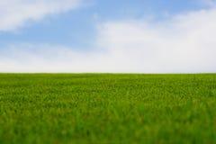 充满活力的草绿色 库存照片