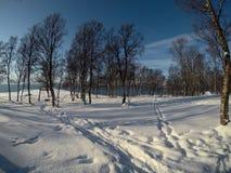 充满活力的蓝天和晴朗的多雪的冬天桦树森林 免版税图库摄影