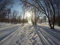 充满活力的蓝天和晴朗的多雪的冬天桦树森林 免版税库存照片