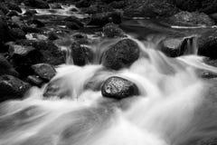 充满灯心草的河 库存照片