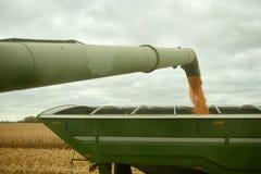 充满被收获的玉米的农厂拖车 库存图片