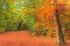 充满活力的秋天秋天森林横向图象 免版税库存图片