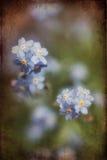 充满活力的勿忘草春天开花与织地不很细和小插图 免版税图库摄影