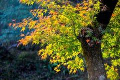 充满活力的叶子在晴天 免版税图库摄影