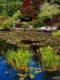 充满活力的庭院 免版税图库摄影