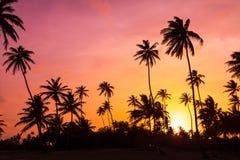充满活力的棕榈日落 免版税库存照片