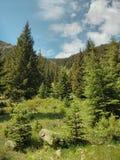 充满活力的森林 免版税库存照片