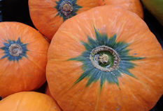 充满活力的橙色颜色成熟热带南瓜堆  免版税库存照片