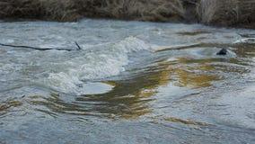 充满活力的河在夏天森林里 股票录像