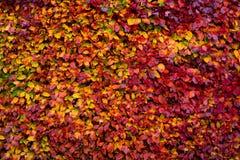充满活力的秋天叶子盖森林地板 免版税图库摄影