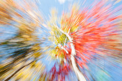 充满活力的自然摘要 在秋天的桦树,缅因 图库摄影