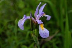 充满活力的紫色和黄色野花 免版税图库摄影
