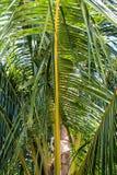 充满活力的绿色棕榈叶 库存图片